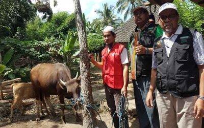 Seekor lembu & seekor kambing aqiqah